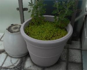 共用部分の植木鉢